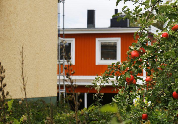 Trädgård med äppelträd i förgrunden